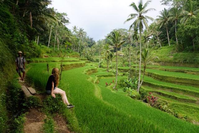 Rijstvelden Ubud Bali