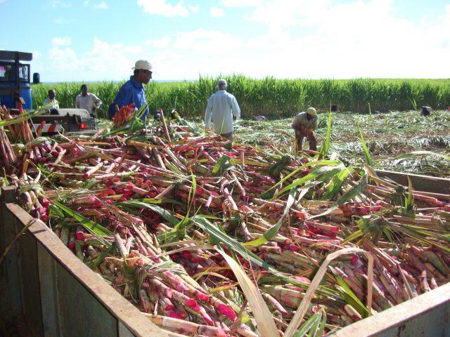 Suikerboeren Mauritius Fair Trade Original
