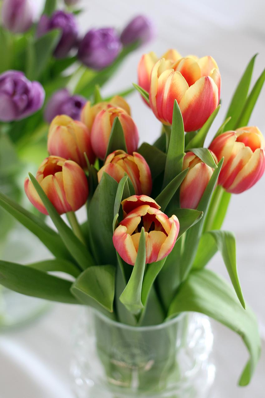 Tulpen voor Moederdag